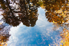 Autumn trees reflection Stock Photo