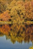 Autumn trees with reflection Stock Photo