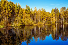 Autumn trees and reflection in water of pond Royalty Free Stock Photo