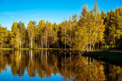 Autumn trees and reflection in water of pond Royalty Free Stock Images