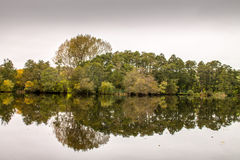 Autumn Trees reflexion Royaltyfria Bilder