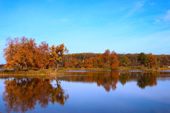 Autumn trees on the river. Reflected in water Royalty Free Stock Image