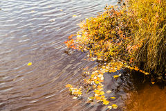 Autumn trees and the river Stock Images