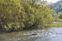 Autumn trees on the river bank Stock Photography