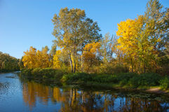 Autumn trees by the river. River with autumn trees and green grass Stock Image