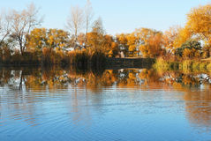 Autumn trees and river Royalty Free Stock Photos