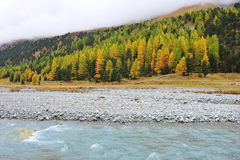 Autumn trees beside a river Stock Photography