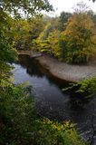 Autumn trees by the river swale stock photos