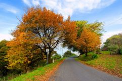 Autumn trees beside road Stock Photography