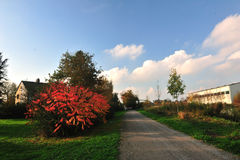 Autumn trees and road and building under sun. In autumn, a small road with buildings trees Stock Image