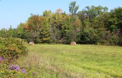 Autumn trees, rolled hay bales and asters Stock Photography
