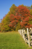 Autumn trees. Rural scene with red maple and other trees in autumn colors Stock Photography
