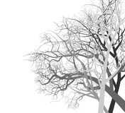 Autumn trees. Seasonal scene vector on a white background Royalty Free Stock Photography