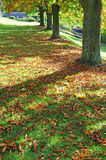 Autumn trees and shadows Royalty Free Stock Image