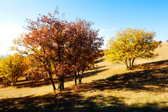 The autumn trees and shadows on the meadow Stock Photo