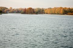 Autumn trees on the shore of the pond. Natural autumn background stock photography