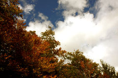 Autumn trees and sky Stock Photography