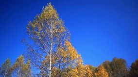 Autumn trees in sky. Nature romantic composition stock footage