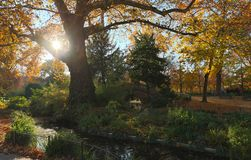 The autumn trees and small bridge in Parc Monceau, Paris, France. royalty free stock photo