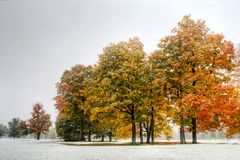 Autumn trees and snow Royalty Free Stock Images
