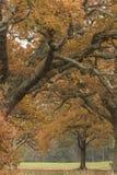 Autumn on Southampton Common royalty free stock photo