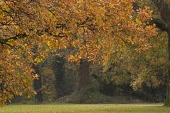 Autumn trees on Southampton Common royalty free stock images