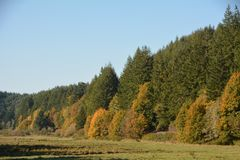 Autumn Trees in Southwest Oregon. This is a forest with some trees turning Autumn colors in Southwest Oregon royalty free stock photos