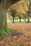 Autumn Trees at Sports Centre Royalty Free Stock Image