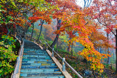Autumn trees and steps in mist Stock Photo
