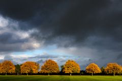 Autumn trees on the Stray in Harrogate. Autumnal trees under a dark sky on the Stray in Harrogate royalty free stock image
