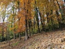 Autumn Trees su una collina Fotografia Stock