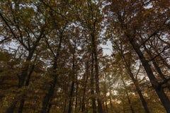 Autumn Trees in sun light Stock Photo