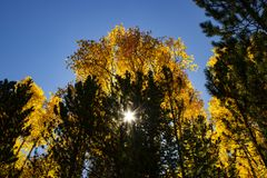 Autumn trees. Sun shining through autumn trees in Colorado, USA royalty free stock image