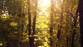 Autumn trees in sunlight.Ray of sun shining through autumn trees. Sunbeam in the autumn forest stock video