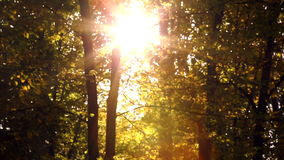 Autumn trees in sunlight.Ray of sun shining through autumn trees. Sunbeam in the autumn forest stock footage