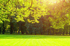 Autumn trees in sunny autumn park lit by sunshine -autumn landscape. Autumn trees in sunny autumn park lit by sunshine - sunny autumn landscape in soft sunlight royalty free stock photography