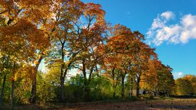 Autumn trees in sunny countryside Stock Images