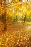 Autumn trees in sunny autumn park lit by sunshine - sunny autumn landscape in bright sunlight. Autumn park scene. Autumn trees in sunny autumn park lit by royalty free stock photography