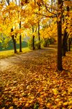 Autumn trees in sunny autumn park lit by sunshine - autumn landscape in bright sunlight. Autumn park sunset scene. Autumn trees in sunny autumn park lit by royalty free stock photos
