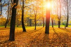 Autumn trees in sunny autumn park lit by sunshine - sunny autumn landscape in soft sunlight. Autumn park sunny scene royalty free stock image