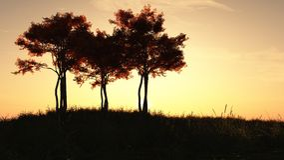Autumn Trees at Sunrise Stock Image