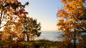 Autumn trees swaying in the wind against the backdrop of the sunset over the sea. Autumn yellow trees swaying in the wind against the backdrop of the sunset over stock footage