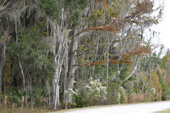 Autumn trees at Sweetwater Wetlands Gainesville, Florida Stock Photography