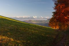 Autumn trees with Swiss alps stock image