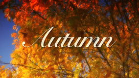 Autumn Trees and Title stock video