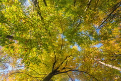 Autumn trees top Royalty Free Stock Photos