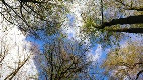 Autumn trees top stock video