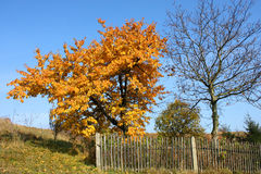 Autumn trees. Autumn tree in countryside garden. Polish landscape Stock Photography