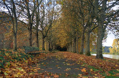 Autumn trees at Trojan Park. Looking along a pathway flanked by autumn trees with a colorful carpet of fallen leaves on the ground Royalty Free Stock Image