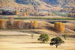 Autumn trees in upland Stock Photography